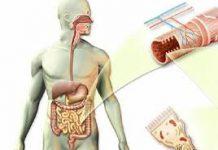 Dva sastojka za oslobađanje organizma od crijevnih parazita