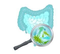 Detoxerum - za čišćenje organizma - kako funckcionira - forum  - ebay